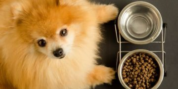 Best Dog Food for Shedding