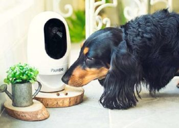 Best Home Security System For Pet Owners