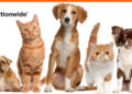 Nationwide Pet Insurance Reviews
